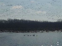 Duck/Deer Hunter's Paradise in : Hamilton : Caldwell County : Missouri