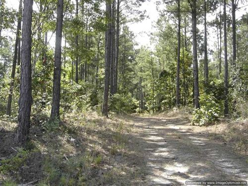 40 ac Recreational And Timberland : Louisville : Winston County : Mississippi