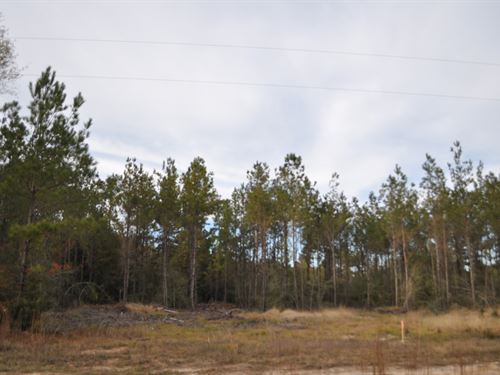 30 Ac East County Rd 62 : Jasper : Texas