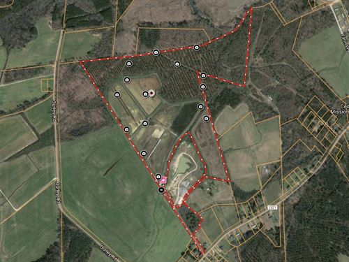 Hunting Property With Timber : Windsor : Bertie County : North Carolina