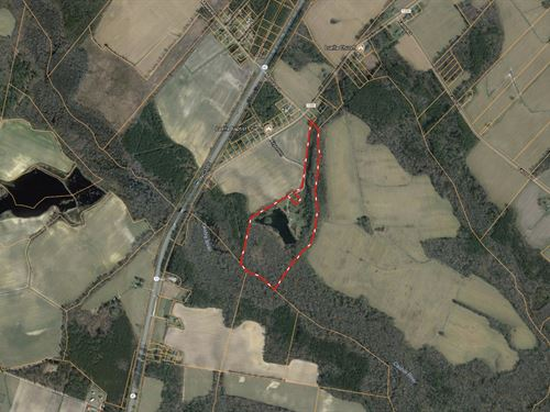 Recreational Hunting Tract For Sale : Kelford : Bertie County : North Carolina
