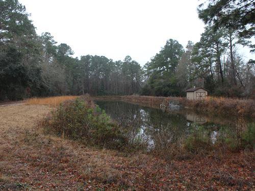 Perry Tract : Ridgeville : Dorchester County : South Carolina