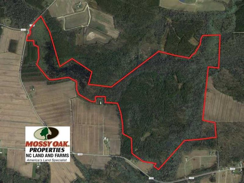 289 Acres of Hunting And Timber La : Columbia : Tyrrell County : North Carolina