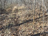 Hwy 247 Hunting Opportunity : Red Bay : Colbert County : Alabama