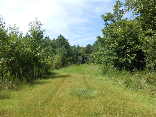 Timber Investment Tract In Pitt Co : Grimesland : Pitt County : North Carolina