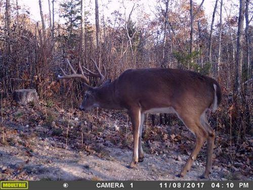 80 Acres - Fantastic Wildlife : Huggins : Texas County : Missouri