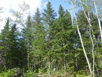 56.39 Acres In Grand Isle, ME : Grand Isle : Aroostook County : Maine