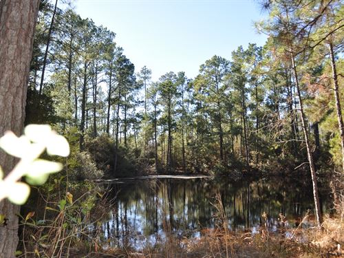 113 Acres Hopewell Road : Huntsville : Walker County : Texas