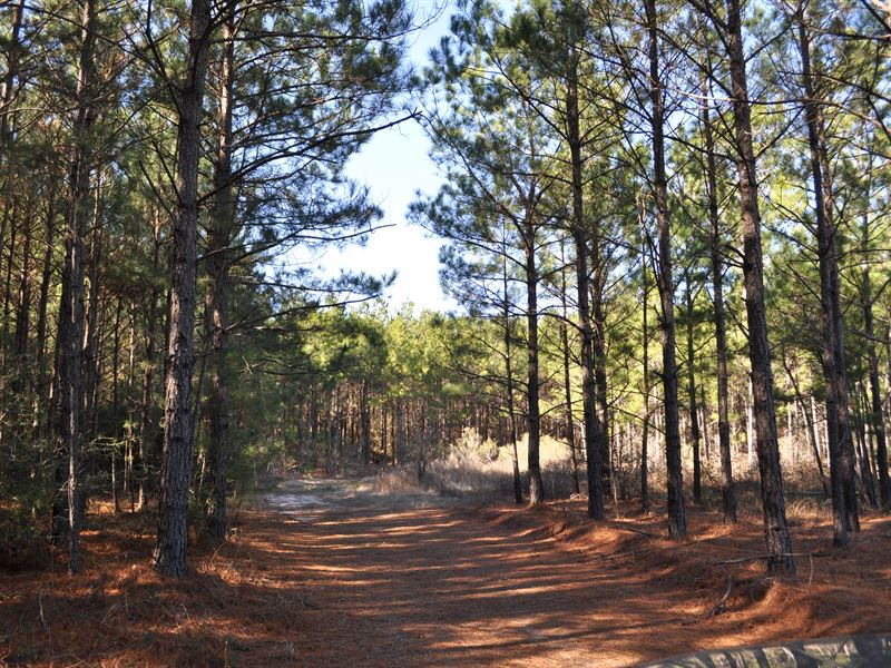 102 Acres Hopewell Road : Bedias : Walker County : Texas