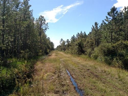 Investment Timber Tract : Palatka : Putnam County : Florida