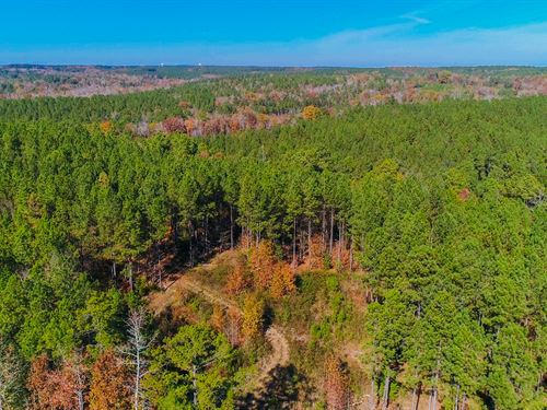 68 Acres With Thinned Pines : Winnsboro : Fairfield County : South Carolina