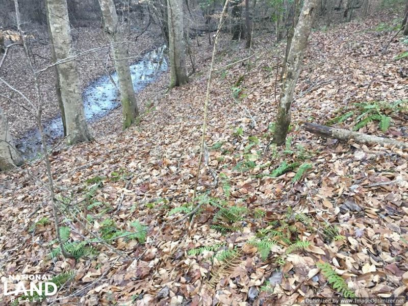 Timber And Recreational Tract in At : Kosciusko : Attala County : Mississippi
