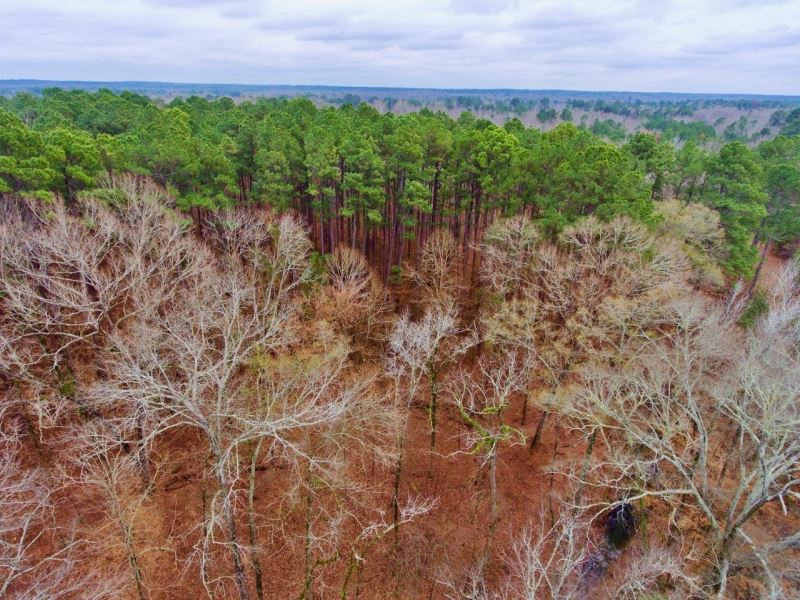 16.8 Acre Timber/Recreational Inves : Greenwood : Caddo Parish : Louisiana
