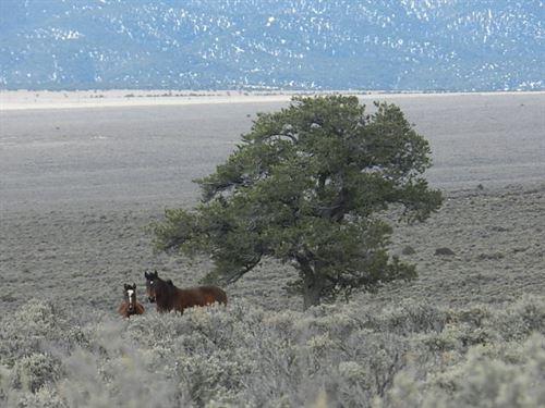 35.15 Acres In San Luis, CO : San Luis : Costilla County : Colorado