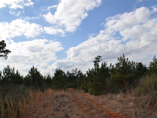95 Acres Lost Indian Camp Road : Huntsville : Walker County : Texas
