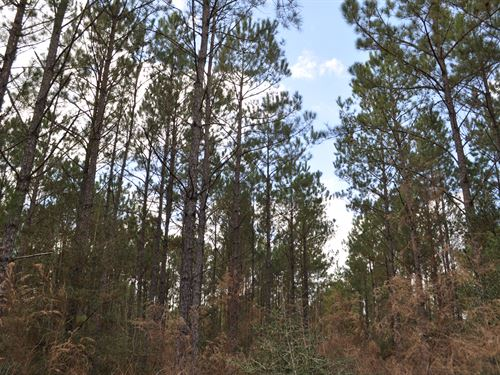 67 Acres Fm 247 & Lost Indian Camp : Huntsville : Walker County : Texas