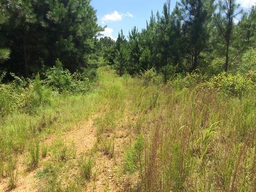 67+/- Acres Cherokee County, Al : Gaylesville : Cherokee County : Alabama