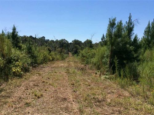 Willie F Tract, Winn Parish, 80 Ac : Clarence : Winn Parish : Louisiana