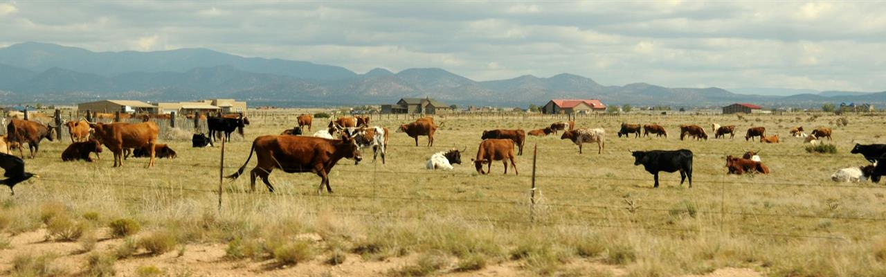 60 Acre Cattle Ranch Only $338/Ac : Sierra Blanca : Hudspeth County : Texas