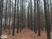 Hunting Property With Timber : Washington : Wilkes County : Georgia
