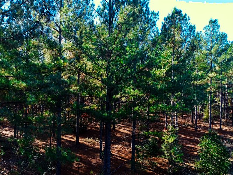 Hunting & Timber Near Laurinburg : Laurinburg : Scotland County : North Carolina