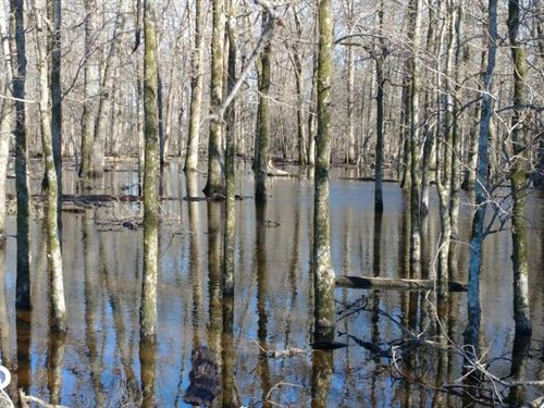 Duck Woods And Deer Hunting Close : England : Lonoke County : Arkansas