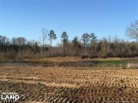 Cotton Land, Timber Land, And Some : Lexington : Holmes County : Mississippi