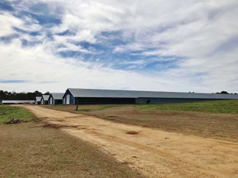 4 broiler houses for sale mount ol ranch for sale for Ranches for sale in mississippi