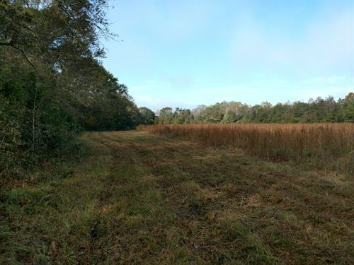 52 Ac. With Cropland & Hardwood : Ozark : Dale County : Alabama