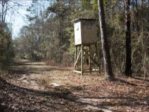 46 Acres In Jefferson Davis County : Prentiss : Jefferson Davis County : Mississippi