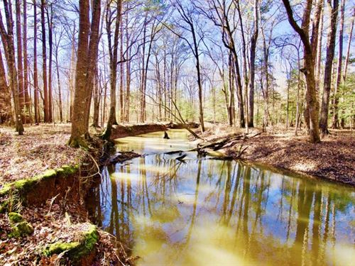 113 Acre Recreational-Timber Land : Shongaloo : Webster Parish : Louisiana