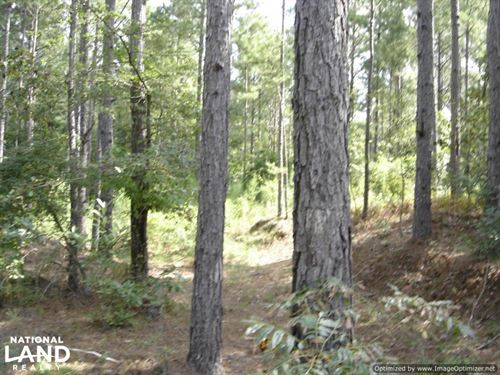 41 ac Hunting And Timber Tract Sout : Louisville : Winston County : Mississippi