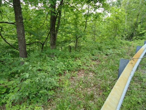 35 Ac With Marketable Timber, Close : Celina : Clay County : Tennessee