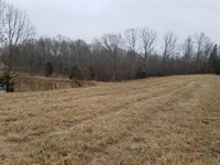 Acreage Ready For Horses : Cedar Grove : Carroll County : Tennessee
