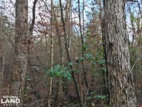 Greenville Hunting And Timber Inves : Greenville : Butler County : Alabama