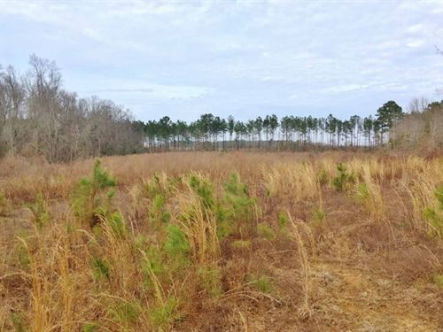 Large Acreage For Sale Walthall Cou : Kokomo : Walthall County : Mississippi