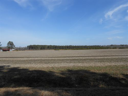 Farmland For Sale Bertie Co Nc : Merry Hill : Bertie County : North Carolina