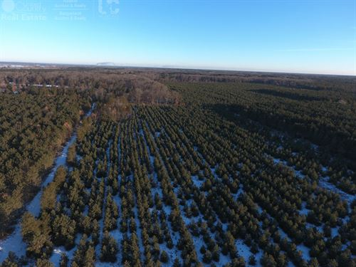 203+ Acre Timberland Hunting Tract : Nekoosa : Adams County : Wisconsin