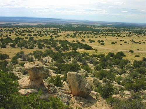 161 Acre Northern Az Ranch : Saint Johns : Apache County : Arizona