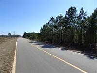 Old Balls Ferry Road Property : Toomsboro : Wilkinson County : Georgia