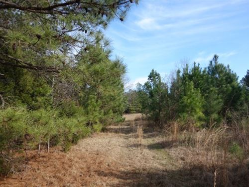 40 Acres - Fairfield County, Sc : Blair : Fairfield County : South Carolina