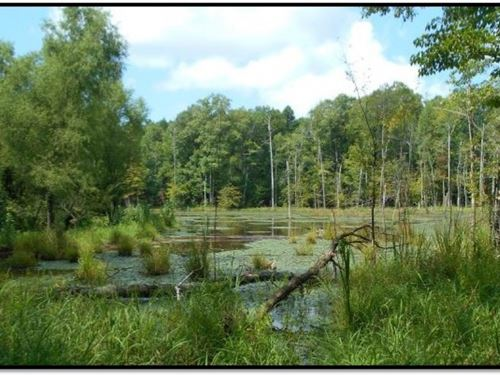 60 Acres In Calhoun County : Big Creek : Calhoun County : Mississippi
