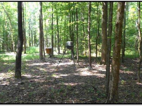 147 Acres In Calhoun County : Big Creek : Calhoun County : Mississippi