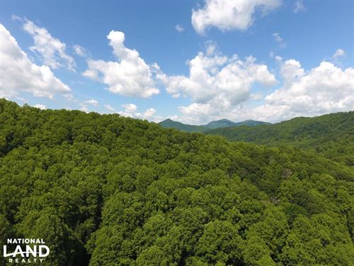Timbered Private Wilderness, Minute : Leicester : Buncombe County : North Carolina