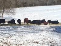 Beautiful Farm And Home : Robbins : Moore County : North Carolina
