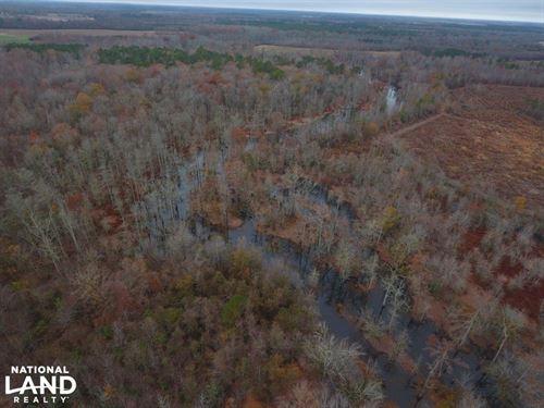 Conoho Creek : Hamilton : Martin County : North Carolina