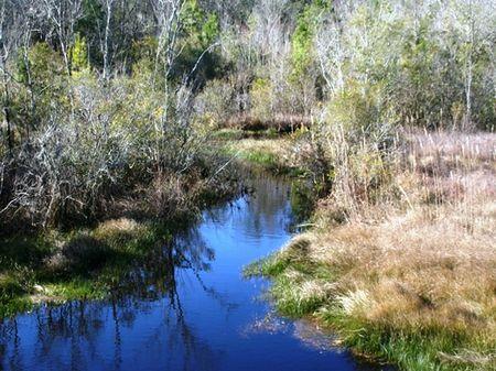 Hammock Creek : Quincy : Gadsden County : Florida