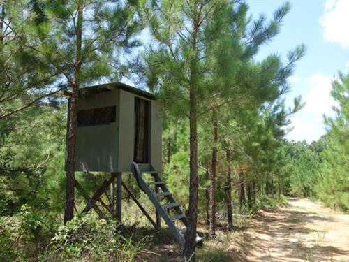 64 Acres - Newberry County, Sc : Silverstreet : Newberry County : South Carolina