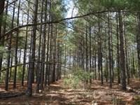 101.71 Acres - Kershaw County, Sc : Bethune : Kershaw County : South Carolina