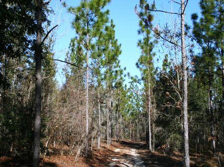 Magnolia Springs : Quincy : Gadsden County : Florida